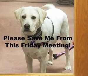 Friday Meeting