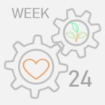 week--24