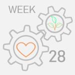 week--28